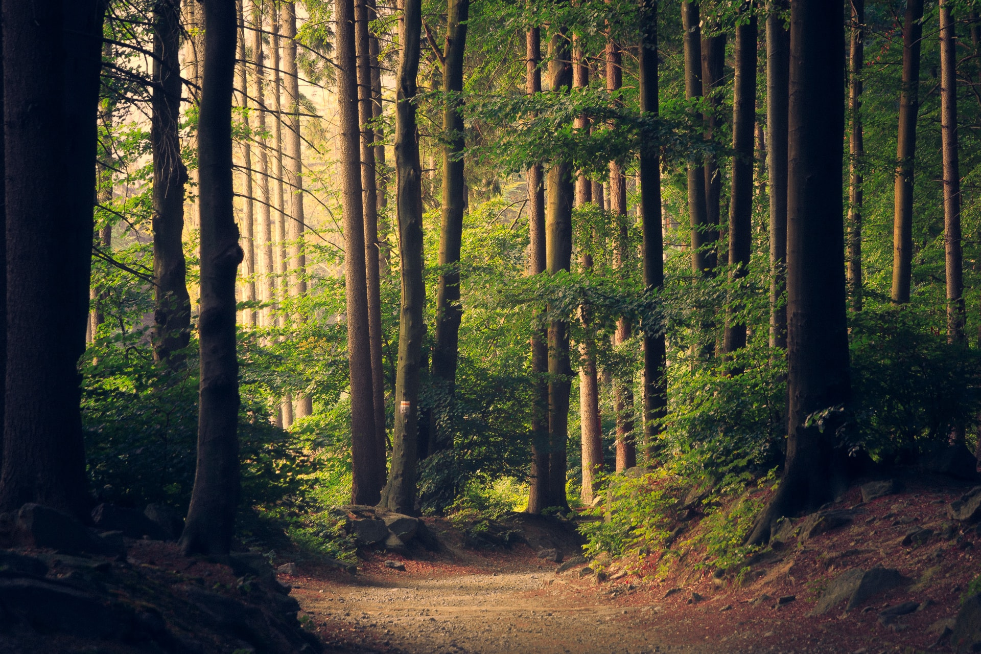 Trees in the forest and carbon sequestration